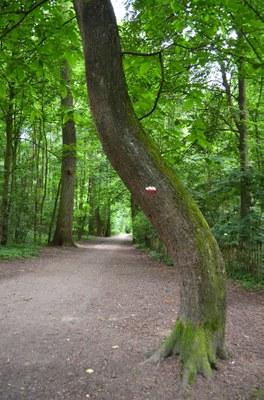 Bois du Laerbeek II