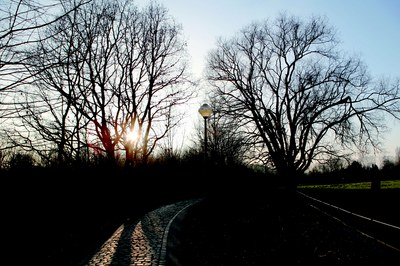 Le bois du Laerbeek le soir